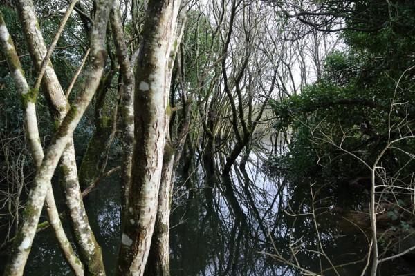Swamp steps