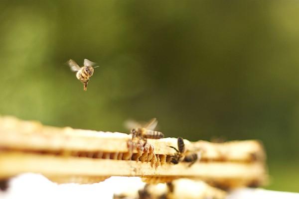 Bee my angel