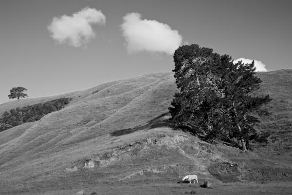 Horse, Tree, Cloud