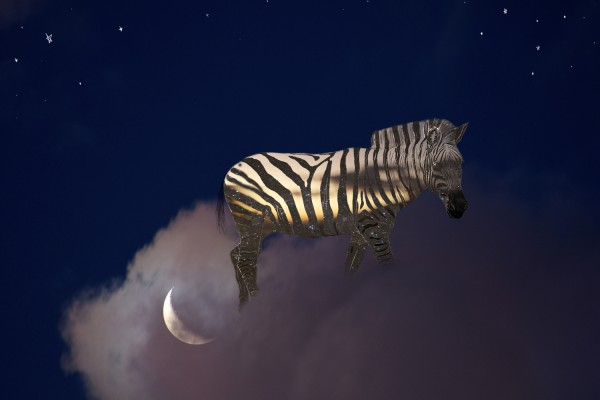Stripes of the night